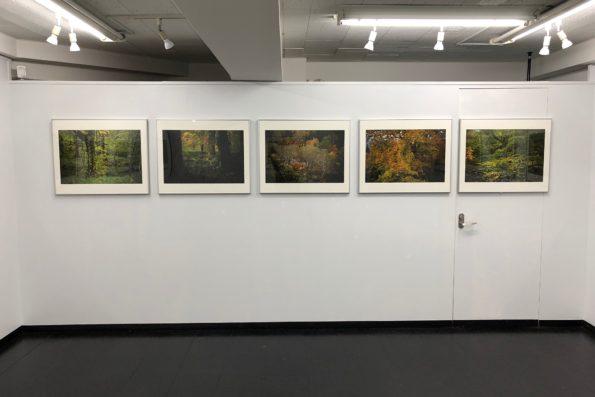 ギャラリー内の画像
